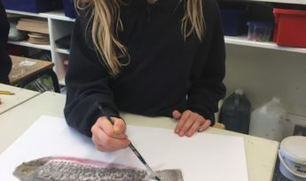 Observational Drawings of Fish by Year 3